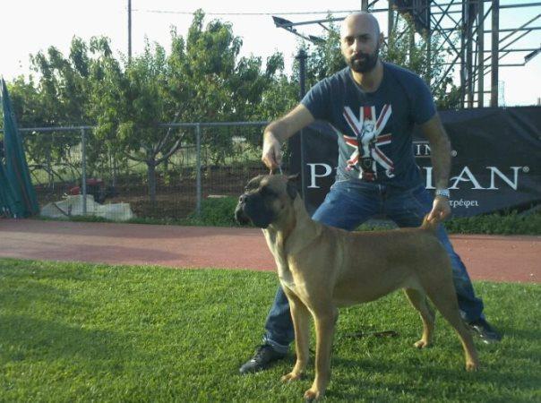 Ο σκύλος μας Cane Corso: Brada