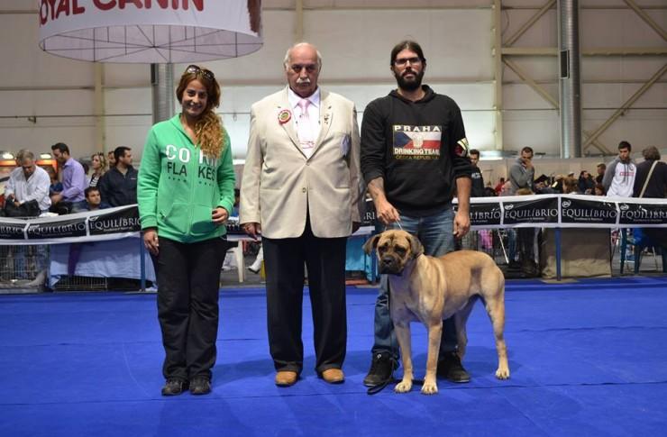 Ο σκύλος μας Cane Corso: Forza Di Razza Europe