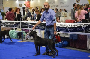 Giuma- Forza Di Razza Kennel